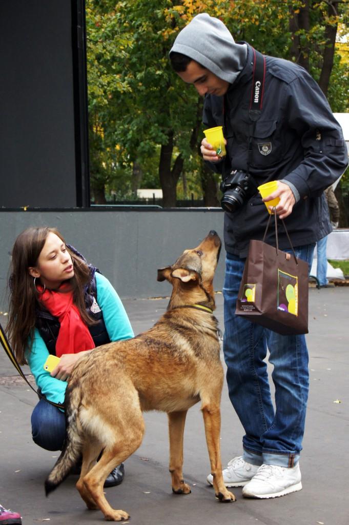 Прививка и выставка собак