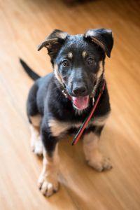 Берта, девочка 3,5 месяца